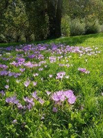 Blumenwiese im Halbschatten.